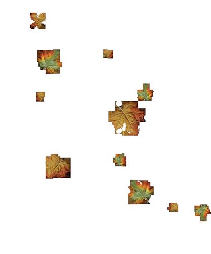 foglieautunno010233