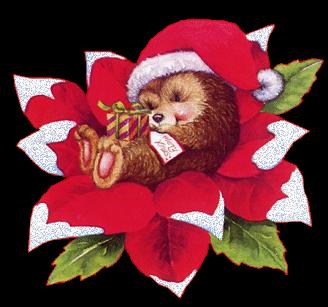 porcospino-stella-di-natale-poinsettia