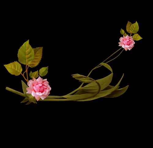 fiorirosa