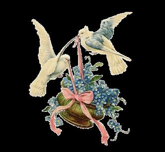 colombe-con fiori